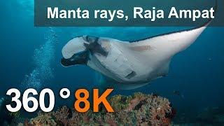 Diving with Manta Ray, Raja Ampat.  8K underwater 360 video thumbnail
