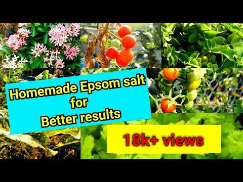 152-Home Made Magnesium | Epsom Salt కి Option అదికూడా Homemade Organic Fertilizer Rich In Magnesium