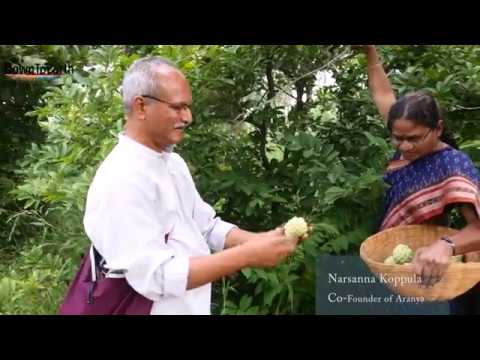 The Aranya story: turning barren land into a food forest using permaculture
