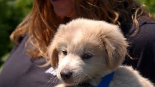 This Adorable Puppy Is Learning How To Go For A Walk | Dr. Jeff: Rocky Mountain Vet