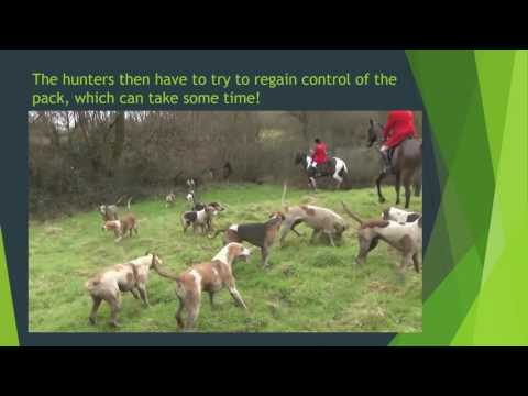 Alfie Moon - Hunt saboteurs, hunt violence and dealing with the authorities (IARC2016)