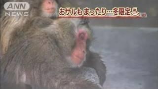北海道の厳しい寒さを乗り越えるため、おサルさんにも温泉のサービスで...