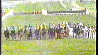 1991 - Cheltenham - Coral Golden H