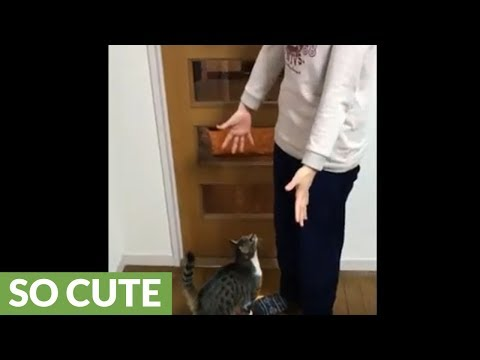 Wie Hoch Können Katzen Springen