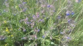 Aşırı Sıcak Topraklarda Yetişen Bitkilere Rastlandı