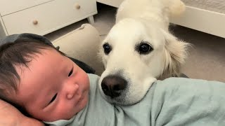 My Dog Meets Newborn for the First Time