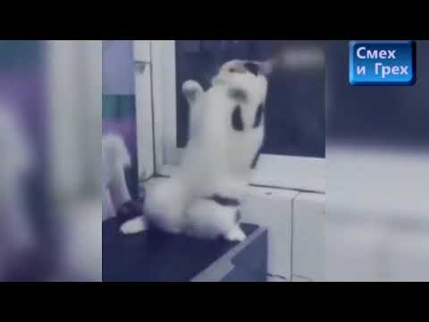 Танец котят.