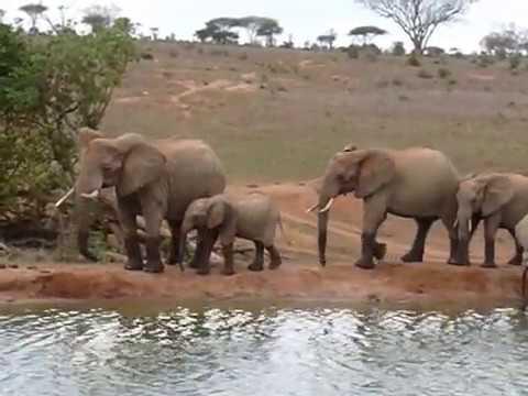 Safari in Tsavo West National Park Kenya