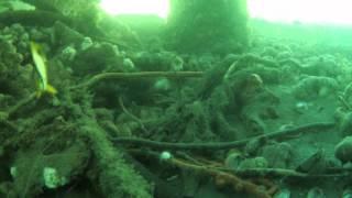 Butterflyfish in Lake Montauk