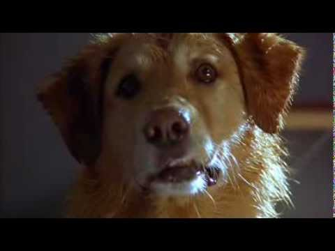 Kevin Zegers - Air bud 1997.