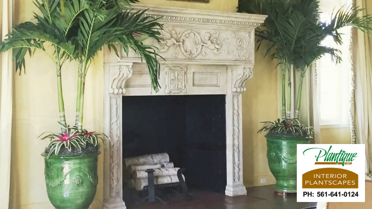 Plantique Inc Plantscapes Interior Palm Trees Palm Beach County Florida Youtube