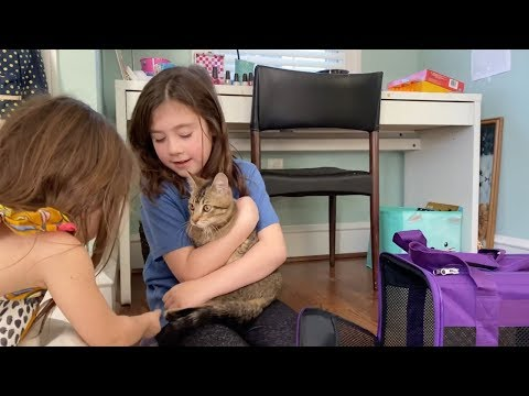 Keith, Tony & Kat - Video Cuteness: Sisters Get Surprised With New Pet Cat