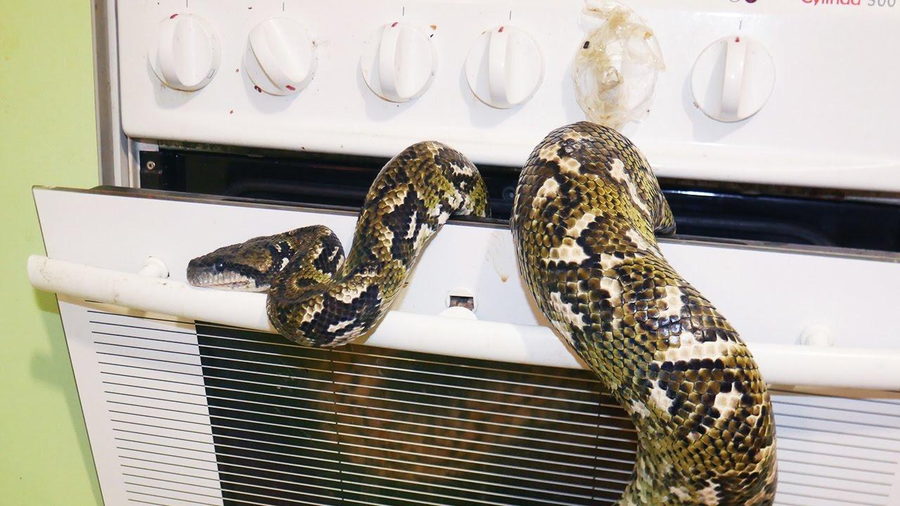 Картинки по запросу 10 лайфхаков, которые могут спасти жизнь змея