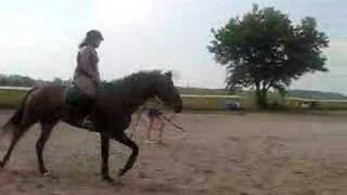 My first attempt at cantering and first time falling off