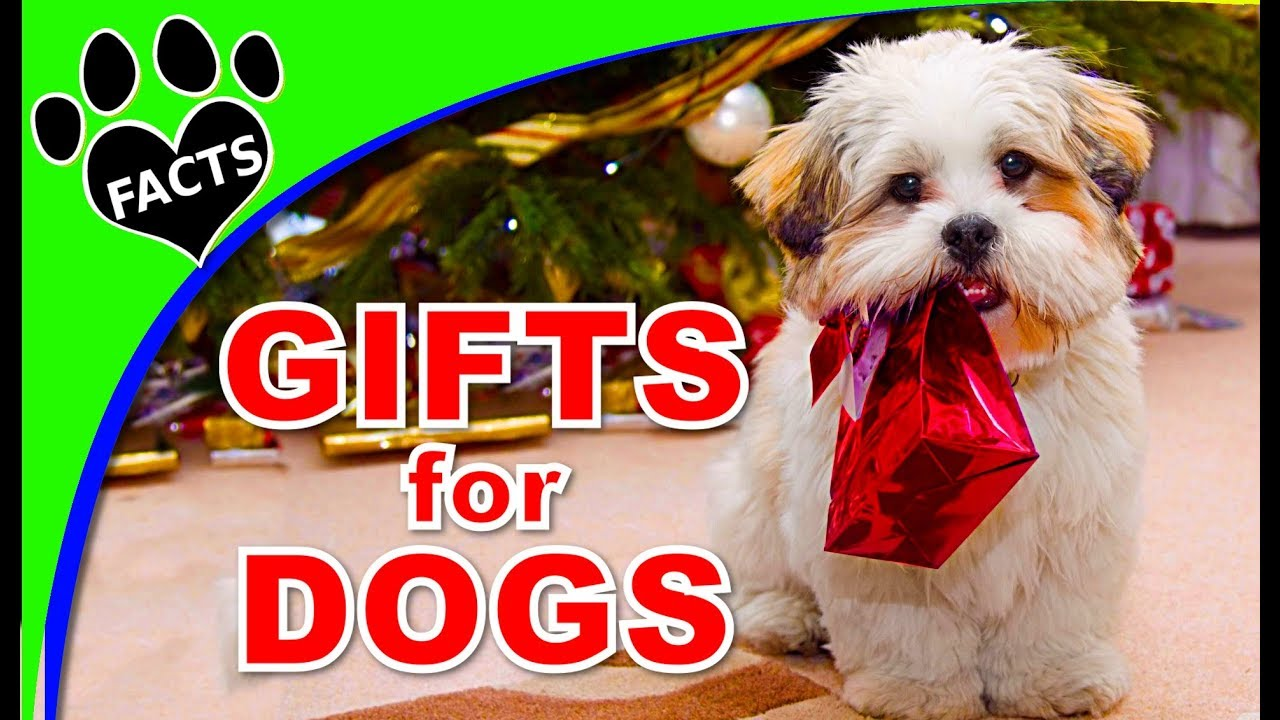Best Christmas Presents for Dogs - Animal Facts