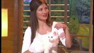 Диалоги о животных/ Симона Лина и турецкая ангора