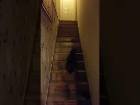 My cat plays fetch