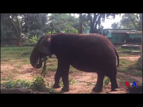 Le zoo d'Abidjan renaît de ses cendres (vidéo)