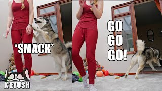 My Husky Smacks Me And Runs Off Laughing!