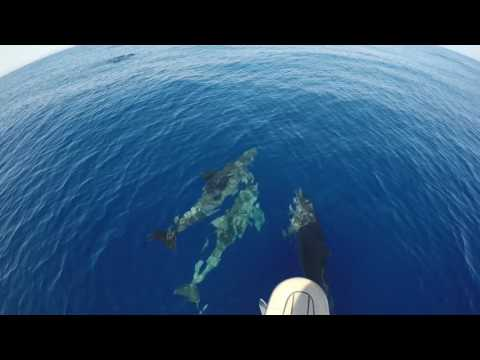 Dolphins in the Aegean Sea