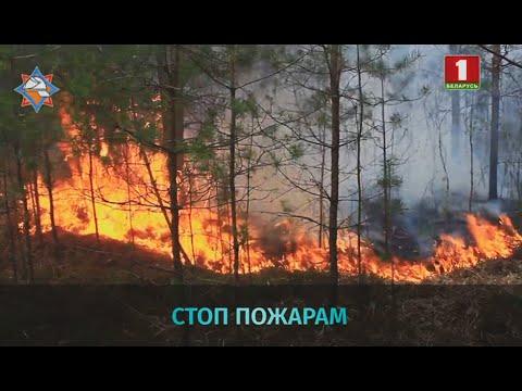 Сложная пожаро-опасная обстановка в Беларуси: в 15 районах запрещено посещать леса