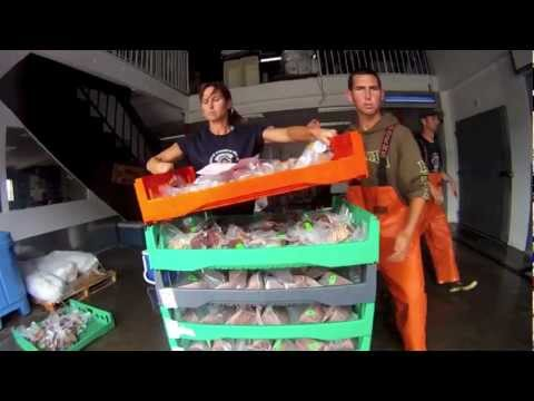 5 Star Fish Processing