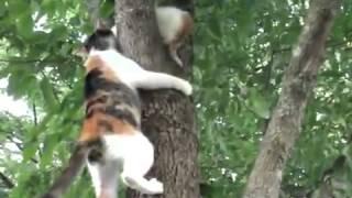 Кошка спасает своего  котенка
