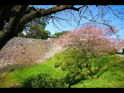 JG☆☆ 4K 福岡 久留米城の桜 Fukuoka,Sakura at Kurume Castle