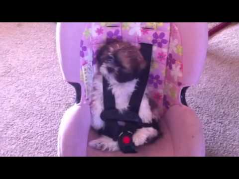 Baby Puts Dog In Car Seat Youtube