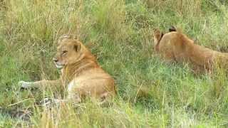Ngorongoro Conservation Area Tours Video