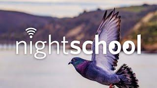 NightSchool: WildLife in the City