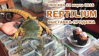 """Выставка - продажа рептилий в Москве """"Reptilium 2018"""" / Змеи, ящерицы, лягушки, пауки, улитки"""