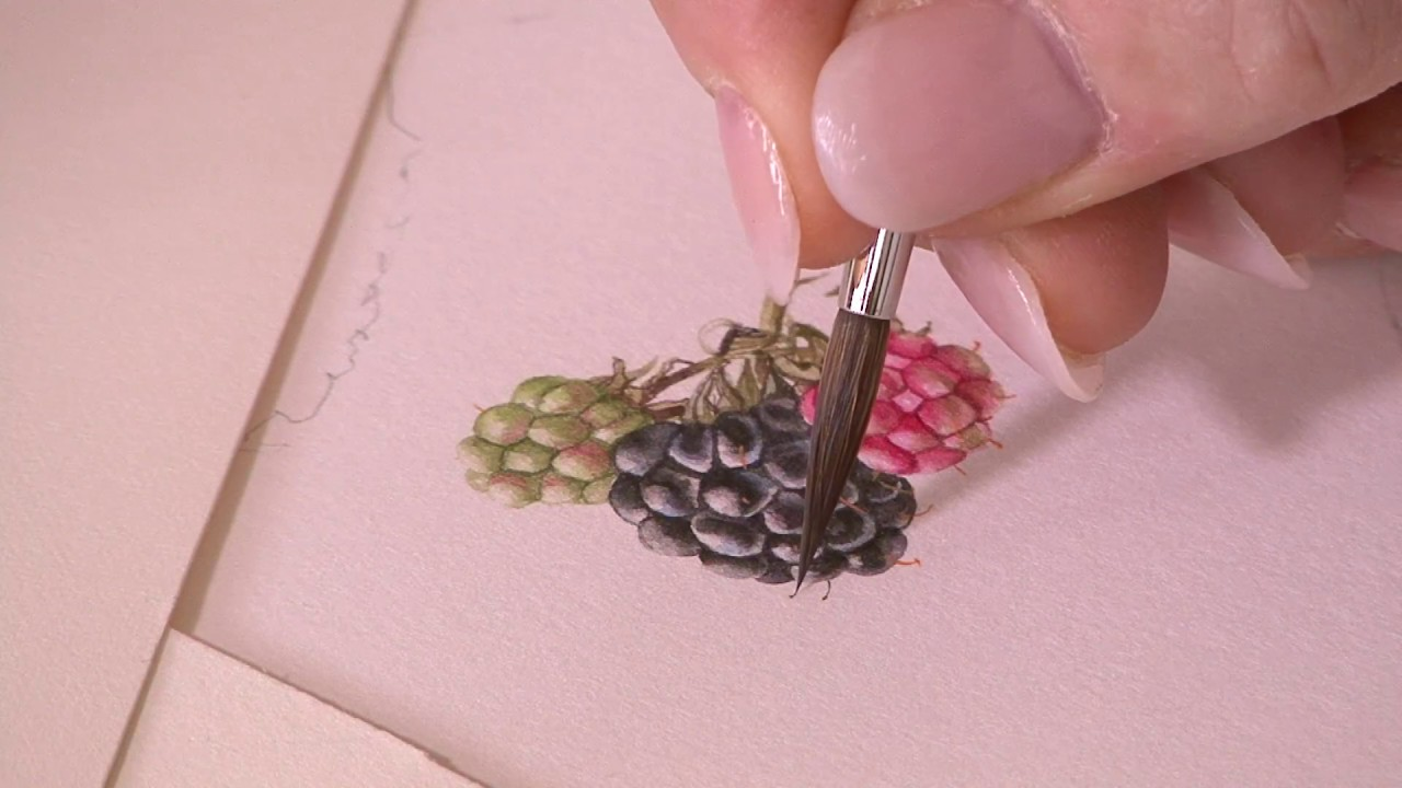 Painting a Blackberry - Preview ⎮ Billy Showell ⎮ Watercolour Beautiful