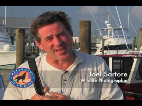 Wildlife Photographer Joel Sartore on the Cost of Offshore D