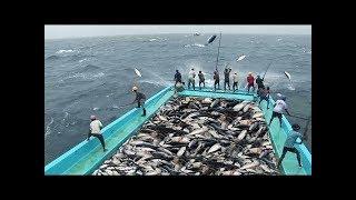 Gambar cover Bu İnsanlar BALIKÇI Değil Sanki Bir MAKİNE (Süper Hızlı Balık İşçileri)