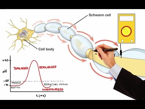 NEURON ACTION POTENTIAL (MADE EASY)