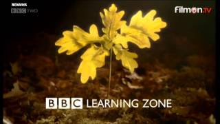 BBC 2 (Learning Zone night junction) 29-1-15