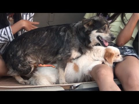 Smart Dogs Playing With Cute Girls In Car - How To Play With Dogs