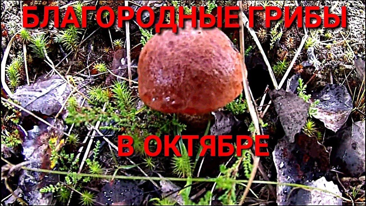 Благородные грибы в октябре. Один в лесу - YouTube