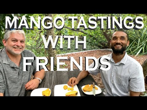 MANGO TASTINGS WITH FRIENDS: GROWN IN OUR GARDEN- COCONUT CREAM,  ANGIE, JULIE & CARRIE MANGOES