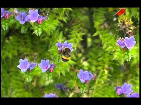 Полезные цветы в огороде