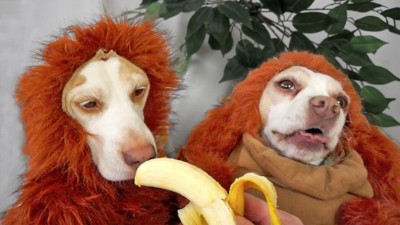 Cute Wallpapers Of Dogs And Puppies Disguise Wizardry 101 Cute Dogs Maymo Amp Penny Youtube
