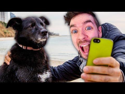 4 ANIMAL GAMES, 1 VIDEO #2