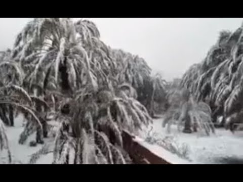 Snows Through N.Africa, Canary Islands and Middle East (519) Mini Ice Age 2015-2035