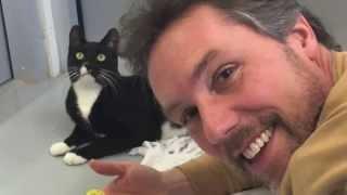 Black Cat Blues by Steve Blunt