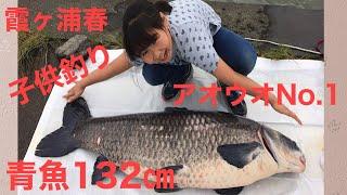 霞ヶ浦 幻の巨大魚 青魚132cm 全日本水郷鯉釣り大会 2016年 春 鯉の代わりに又しても青魚ヒット