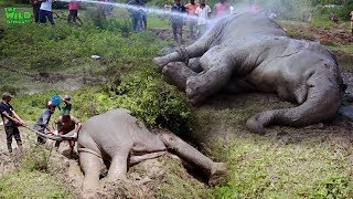 Faith In Humanity, Saving an elephant from Plastic pollution