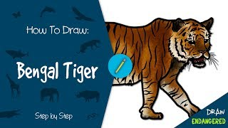 Draw Endangered: How to Draw a Bengal Tiger