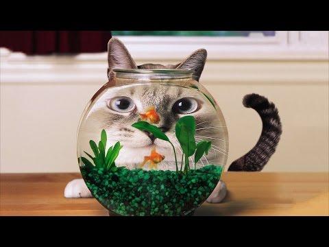 Смешное видео про кошек -