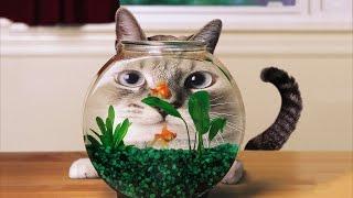 Забавные коты. Развлекательное видео для детей и взрослых